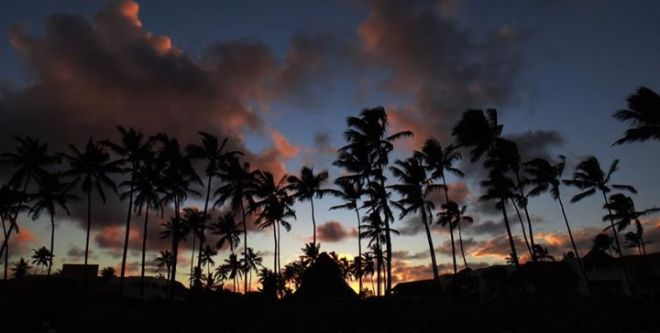 Wow! The amazing colors of the sunset illuminate the silhouettes of the palm trees in this perfect image from Jon Gigoux Von Sennitzky!