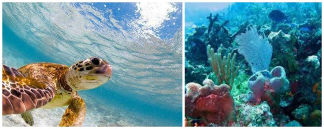 Experience another world with scuba diving and snorkeling at Secrets Akumal Riviera Maya.